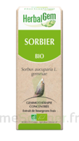 Herbalgem Sorbier Macérat bio 30ml à YZEURE