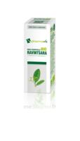 Huile essentielle Bio Ravintsara  à YZEURE