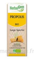 Herbalgem Propolis large spectre Solution buvable bio Fl cpte-gttes/15ml à YZEURE