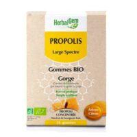Herbalgem Propolis large spectre Gomme bio B/24 à YZEURE
